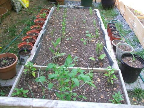 garden6113